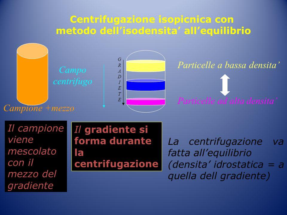 Centrifugazione isopicnica con metodo dell'isodensita' all'equilibrio