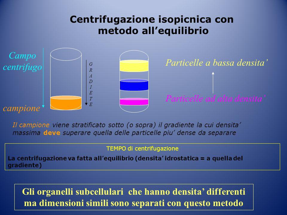 Centrifugazione isopicnica con metodo all'equilibrio