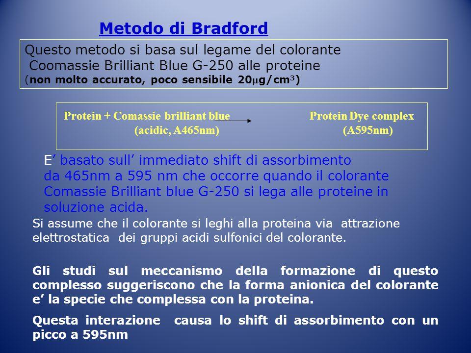Metodo di Bradford Questo metodo si basa sul legame del colorante