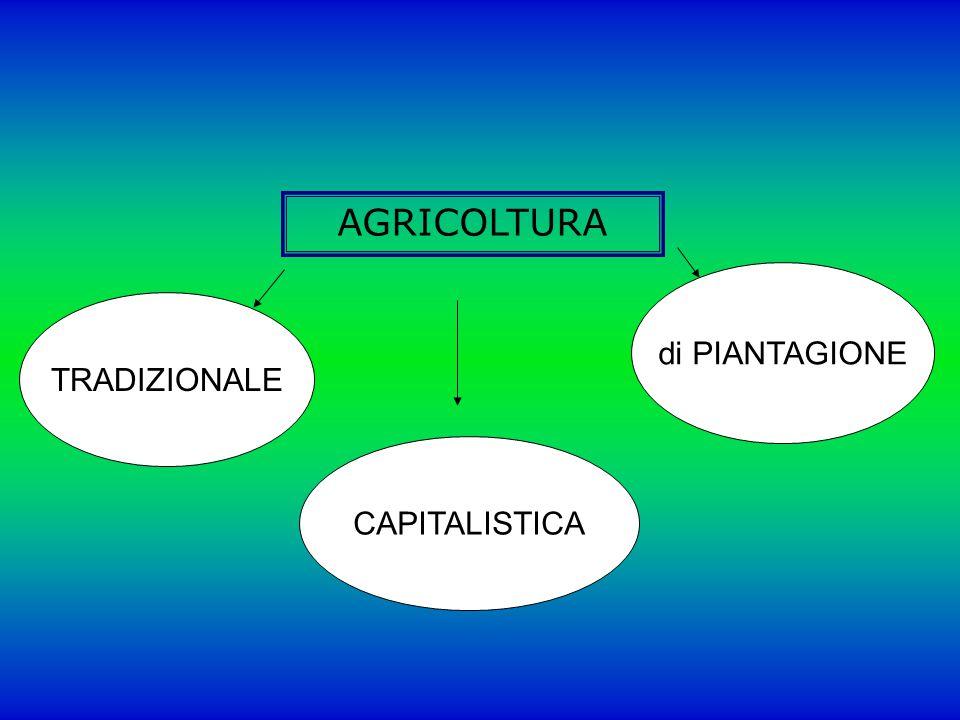 AGRICOLTURA di PIANTAGIONE TRADIZIONALE CAPITALISTICA