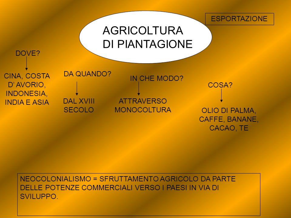 AGRICOLTURA DI PIANTAGIONE