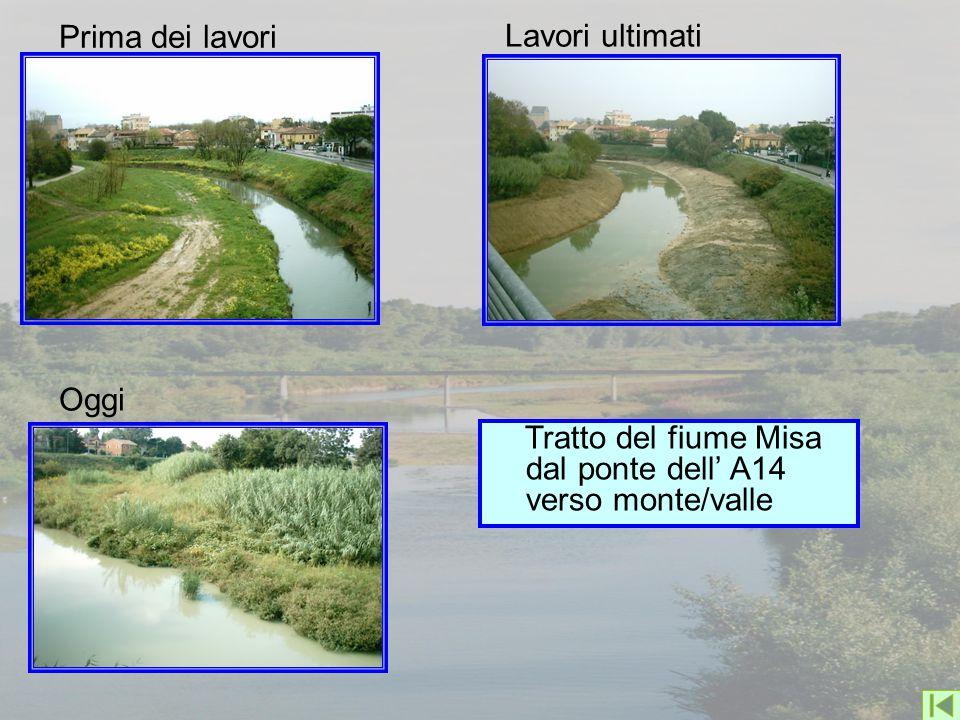 Prima dei lavori Lavori ultimati Oggi Tratto del fiume Misa dal ponte dell' A14 verso monte/valle