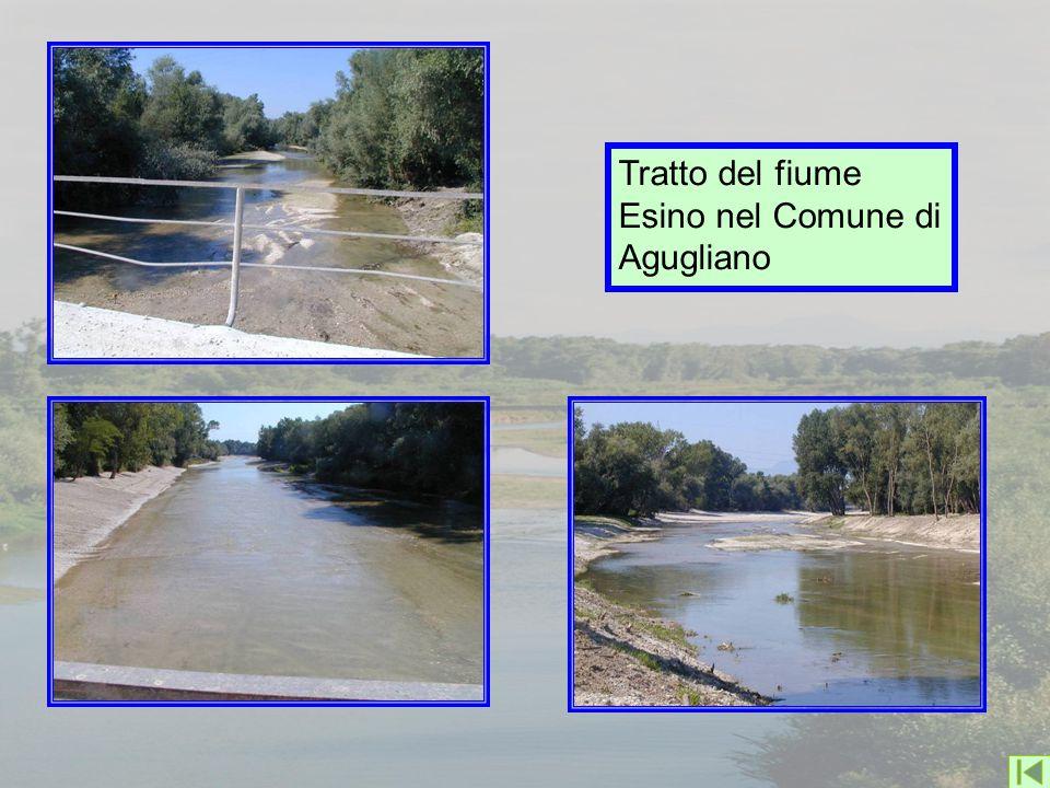 Tratto del fiume Esino nel Comune di Agugliano