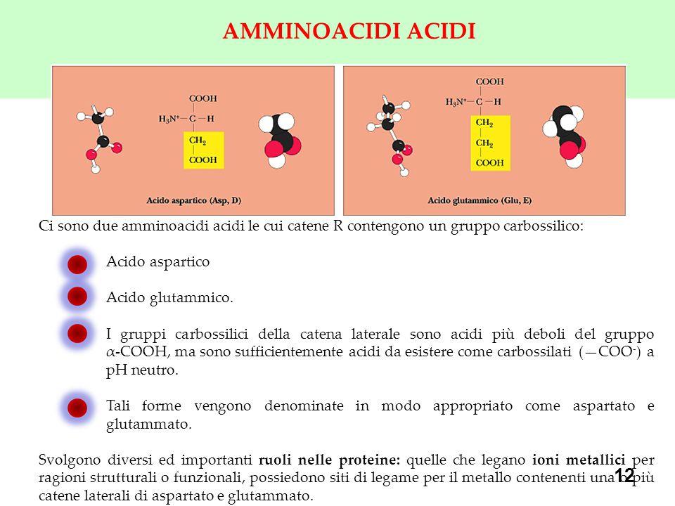 AMMINOACIDI ACIDI Ci sono due amminoacidi acidi le cui catene R contengono un gruppo carbossilico: Acido aspartico.