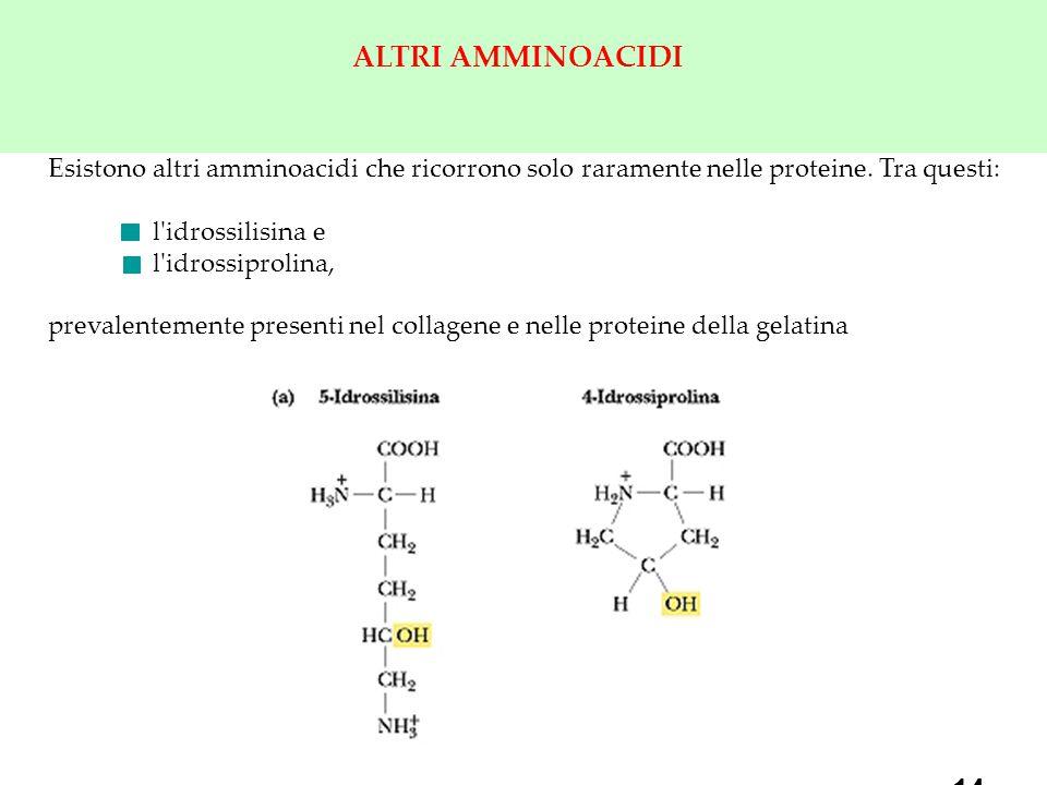 ALTRI AMMINOACIDI Esistono altri amminoacidi che ricorrono solo raramente nelle proteine. Tra questi: