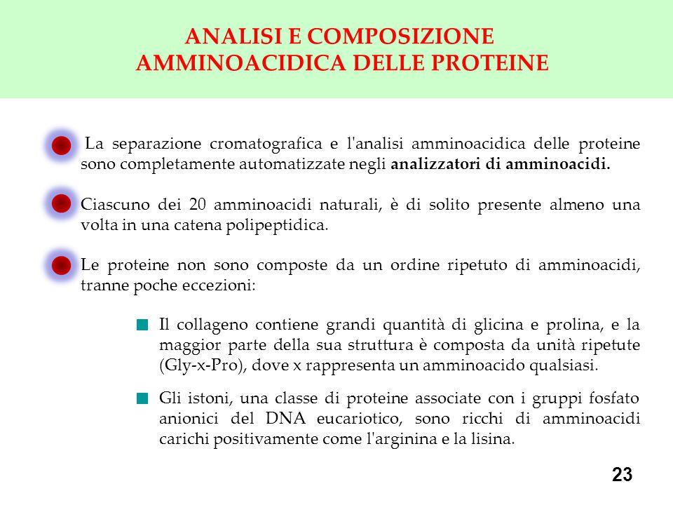 ANALISI E COMPOSIZIONE AMMINOACIDICA DELLE PROTEINE