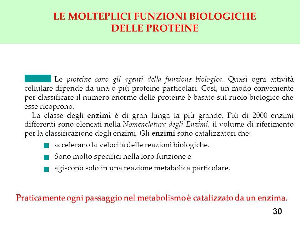 LE MOLTEPLICI FUNZIONI BIOLOGICHE DELLE PROTEINE