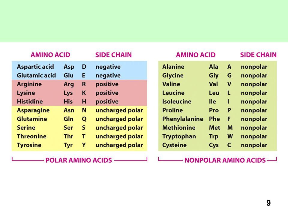 Ogni amminoacido è indicato con abbreviazioni a tre e una lettera