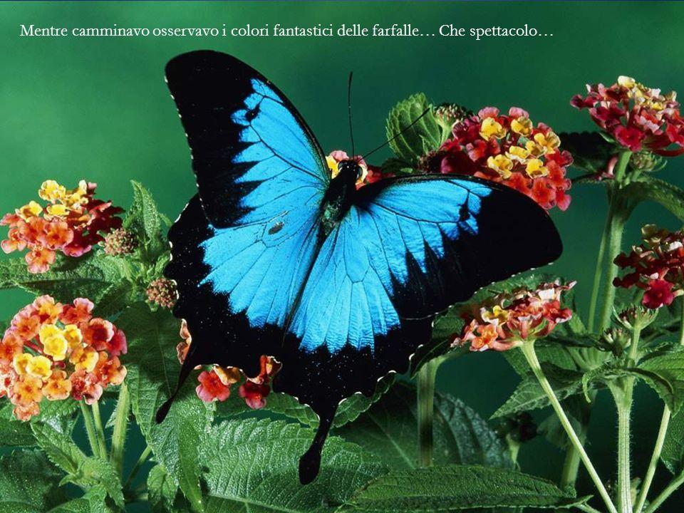 Mentre camminavo osservavo i colori fantastici delle farfalle… Che spettacolo…