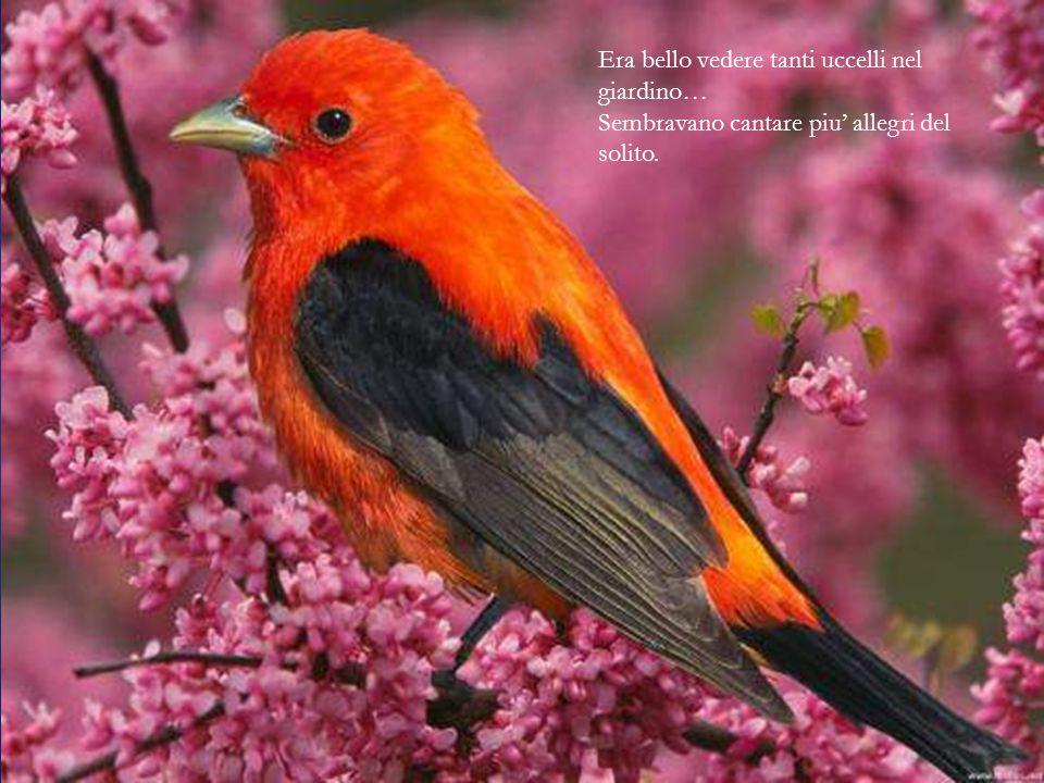 Era bello vedere tanti uccelli nel giardino…