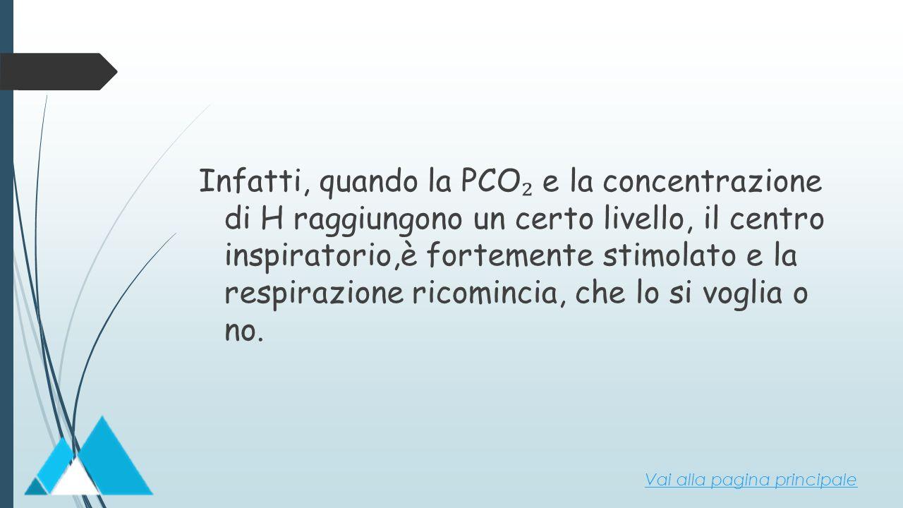 Infatti, quando la PCO₂ e la concentrazione di H raggiungono un certo livello, il centro inspiratorio,è fortemente stimolato e la respirazione ricomincia, che lo si voglia o no.