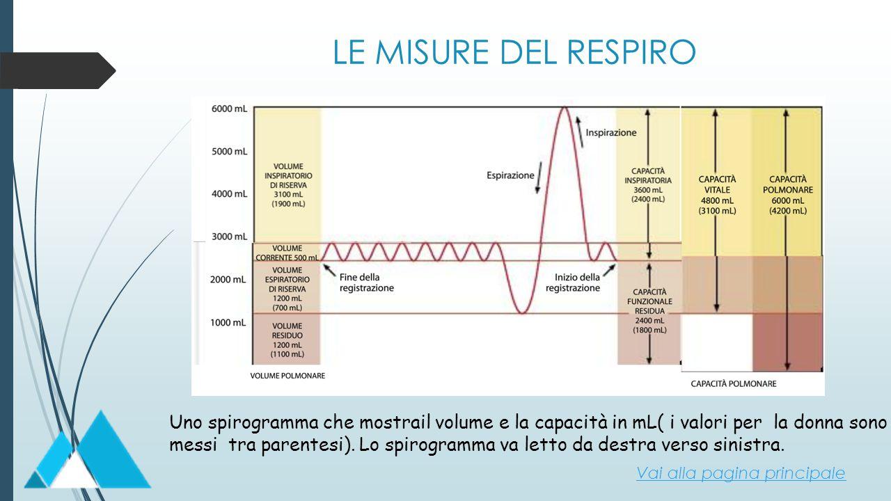 LE MISURE DEL RESPIRO Uno spirogramma che mostrail volume e la capacità in mL( i valori per la donna sono.