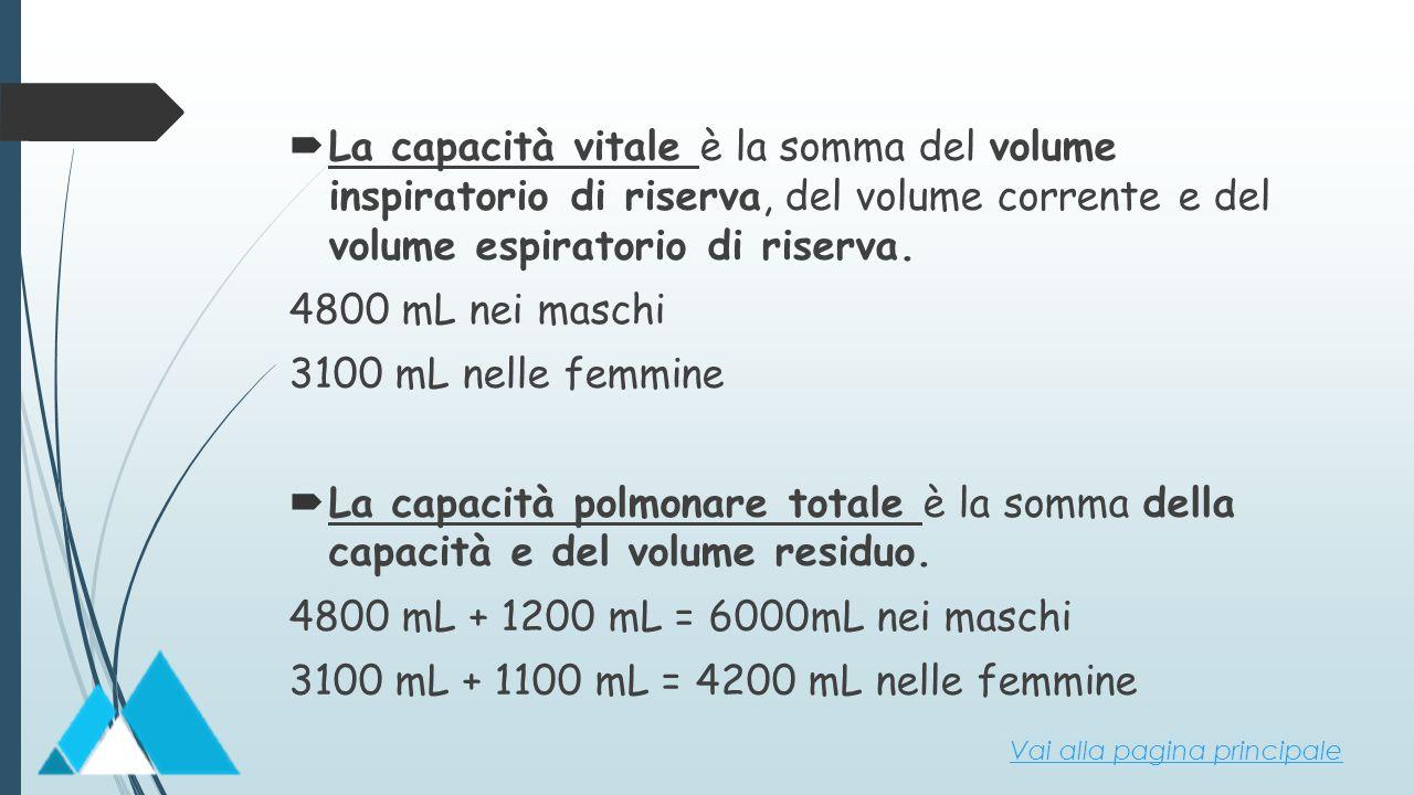 3100 mL + 1100 mL = 4200 mL nelle femmine