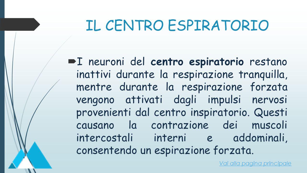 IL CENTRO ESPIRATORIO