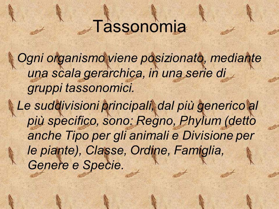 Tassonomia Ogni organismo viene posizionato, mediante una scala gerarchica, in una serie di gruppi tassonomici.