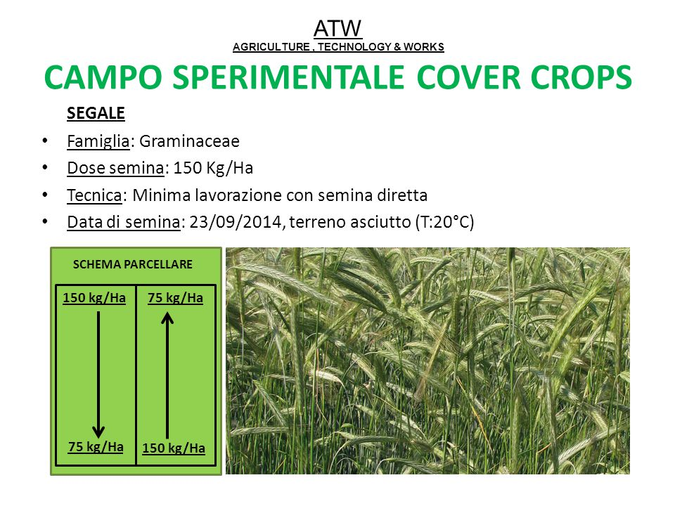 ATW AGRICULTURE , TECHNOLOGY & WORKS CAMPO SPERIMENTALE COVER CROPS