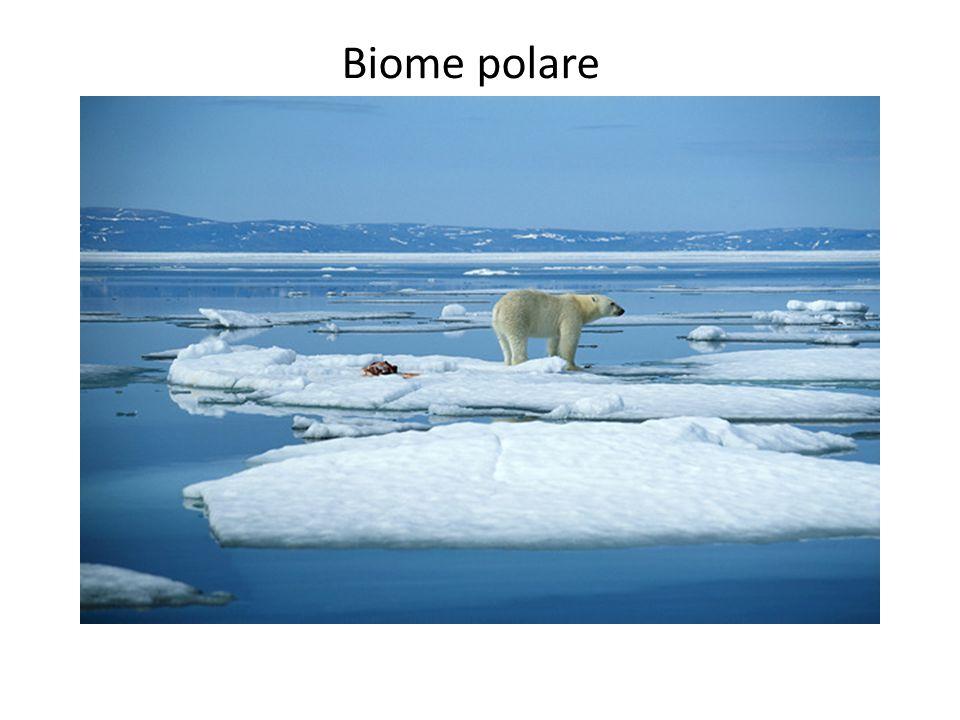 Biome polare