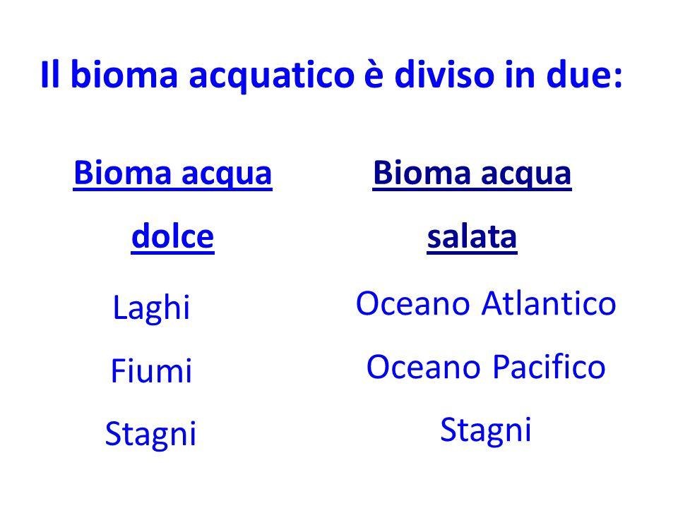 Il bioma acquatico è diviso in due: