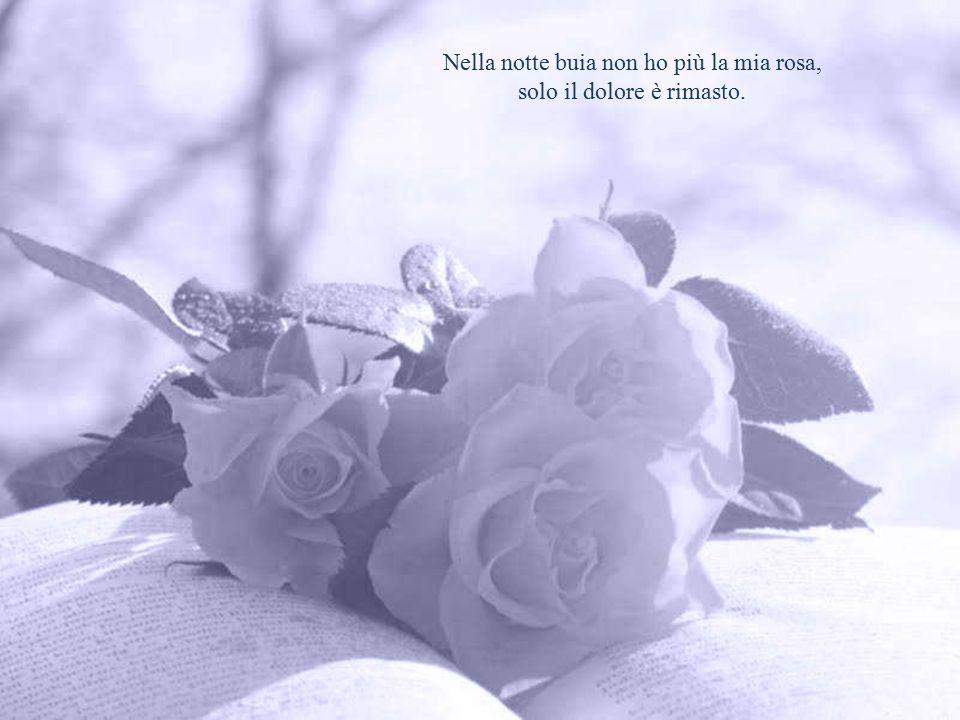 Nella notte buia non ho più la mia rosa, solo il dolore è rimasto.