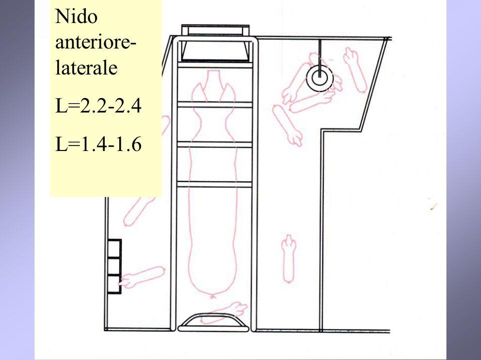 Nido anteriore-laterale