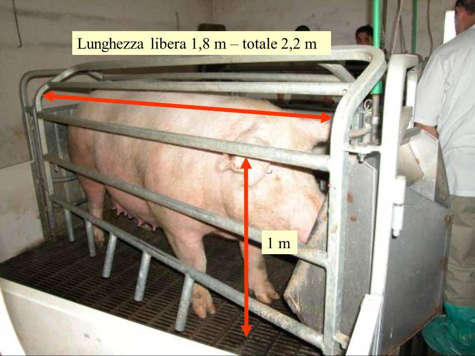 Lunghezza libera 1,8 m – totale 2,2 m