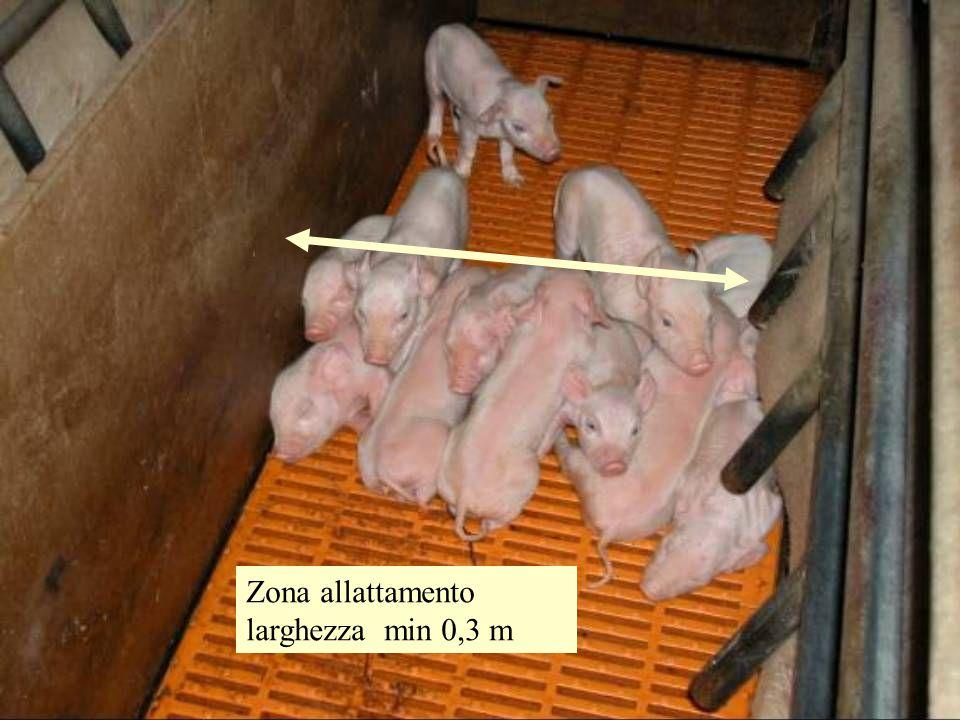 Zona allattamento larghezza min 0,3 m