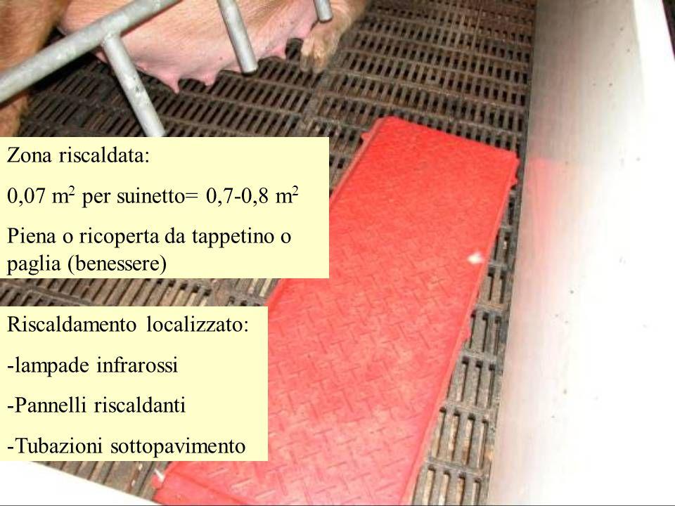 Zona riscaldata: 0,07 m2 per suinetto= 0,7-0,8 m2. Piena o ricoperta da tappetino o paglia (benessere)
