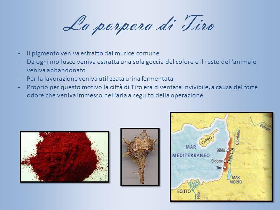 La porpora di Tiro Il pigmento veniva estratto dal murice comune