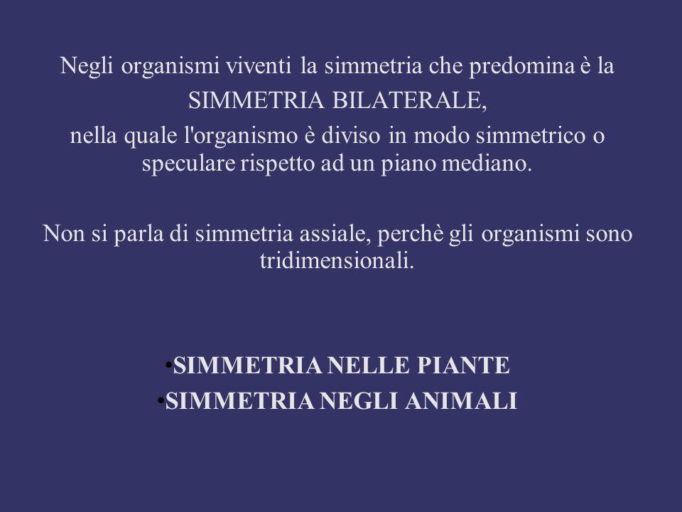 SIMMETRIA NELLE PIANTE SIMMETRIA NEGLI ANIMALI