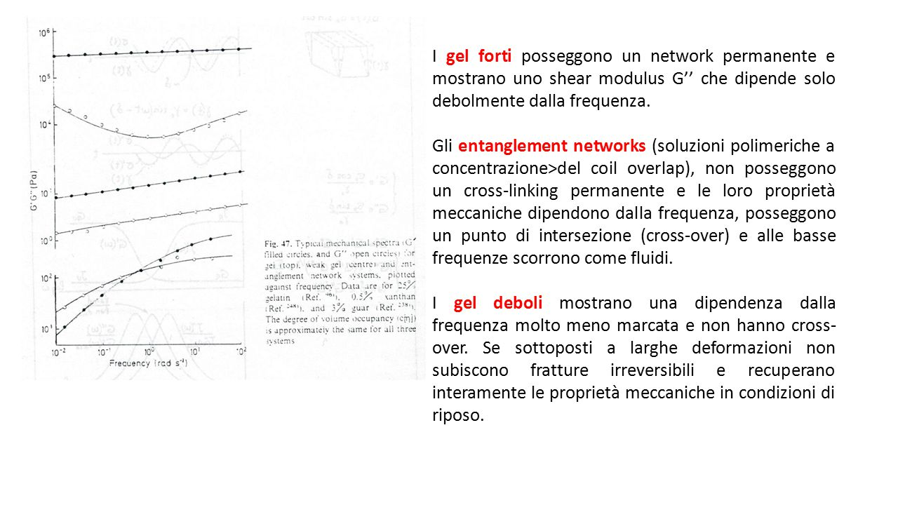 I gel forti posseggono un network permanente e mostrano uno shear modulus G'' che dipende solo debolmente dalla frequenza.