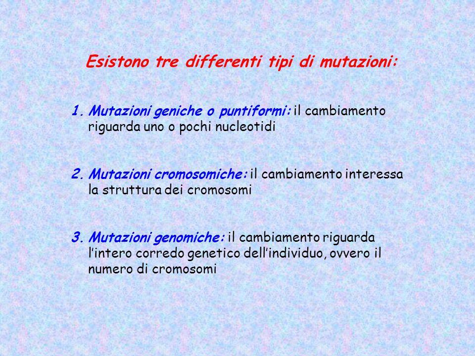 Esistono tre differenti tipi di mutazioni: