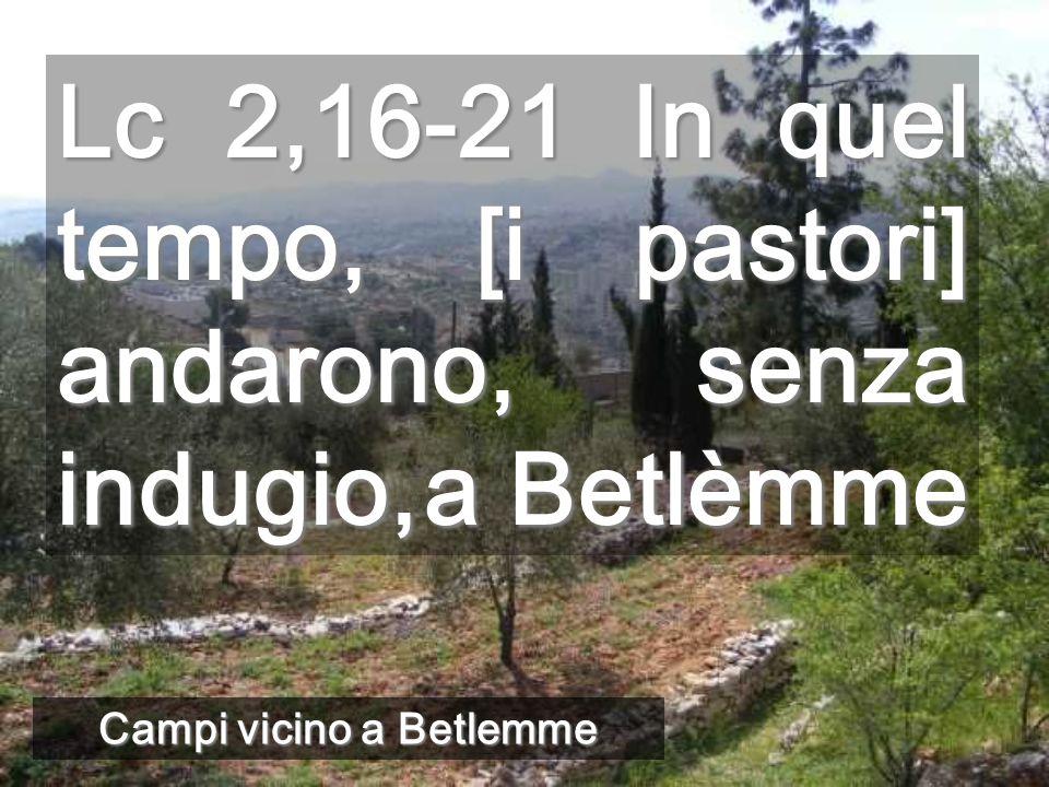 Campi vicino a Betlemme