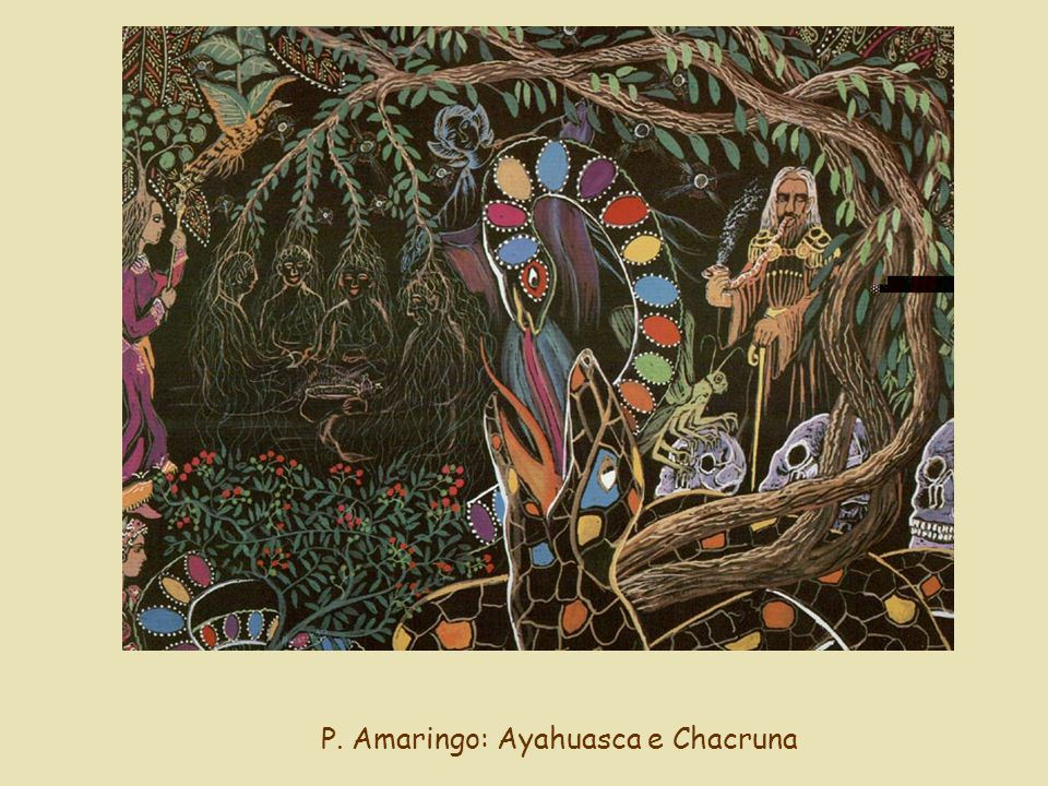 P. Amaringo: Ayahuasca e Chacruna