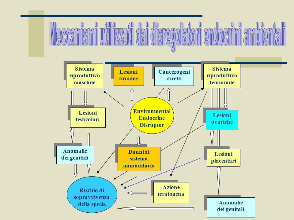 Meccanismi utilizzati dai disregolatori endocrini ambientali