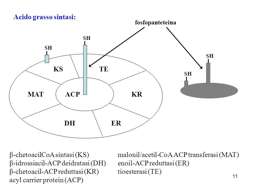 β-chetoacilCoA sintasi (KS) malonil/acetil-CoA ACP transferasi (MAT)