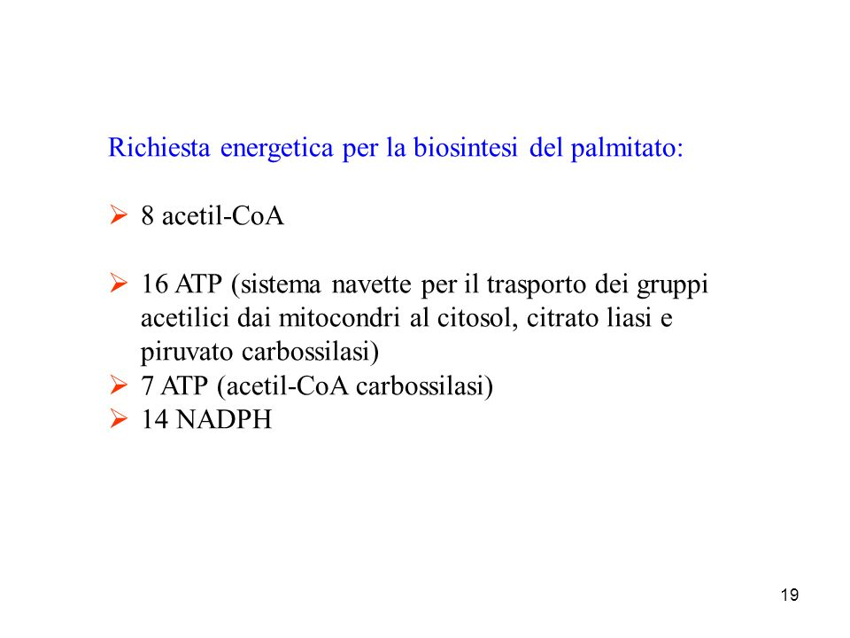 Richiesta energetica per la biosintesi del palmitato: