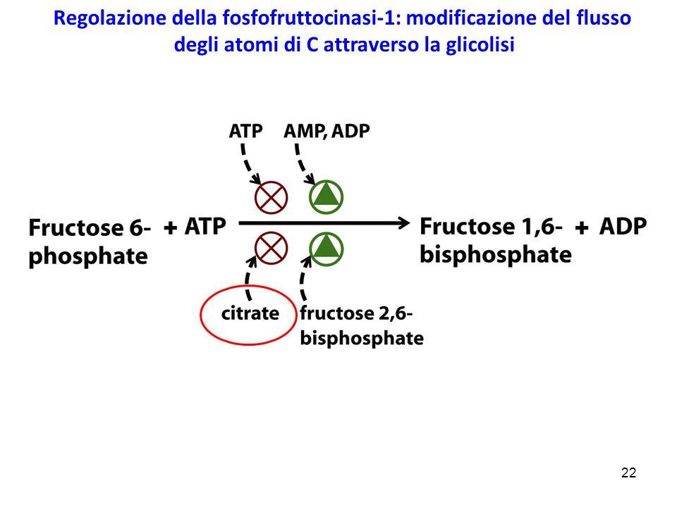 Regolazione della fosfofruttocinasi-1: modificazione del flusso