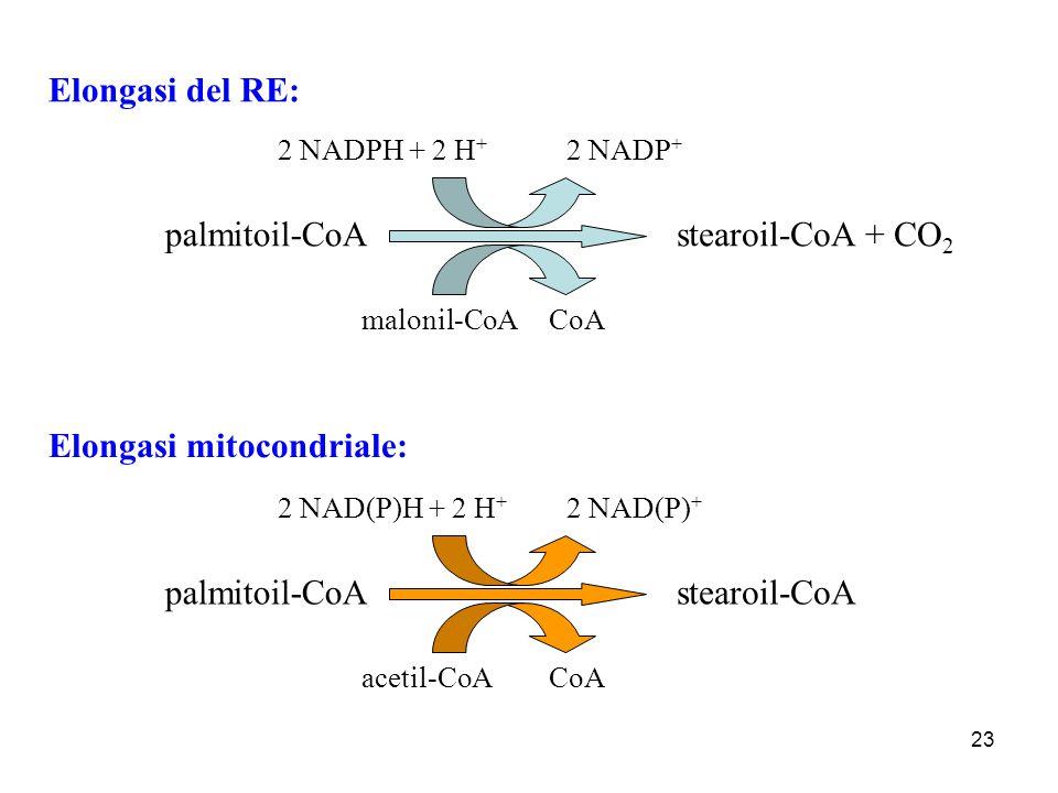 Elongasi mitocondriale: