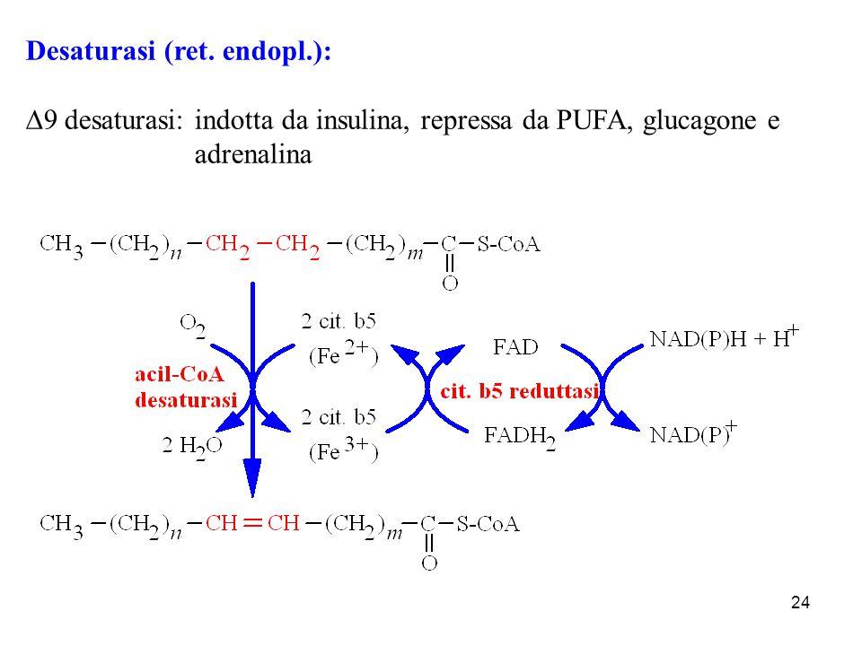 Desaturasi (ret. endopl.):
