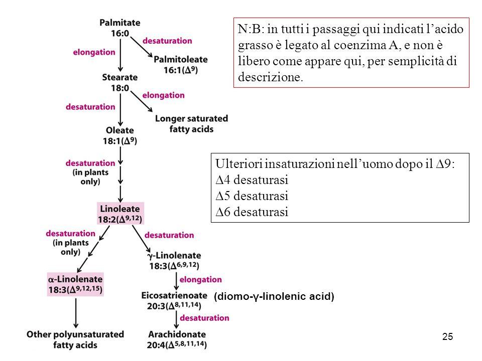 Ulteriori insaturazioni nell'uomo dopo il D9: D4 desaturasi