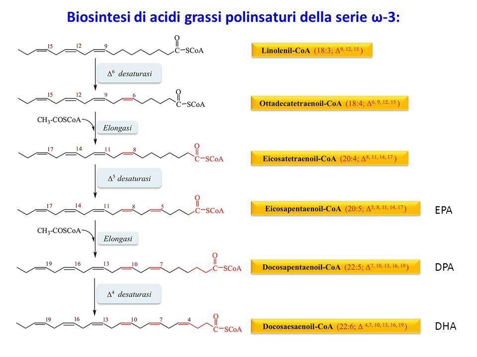 Biosintesi di acidi grassi polinsaturi della serie ω-3:
