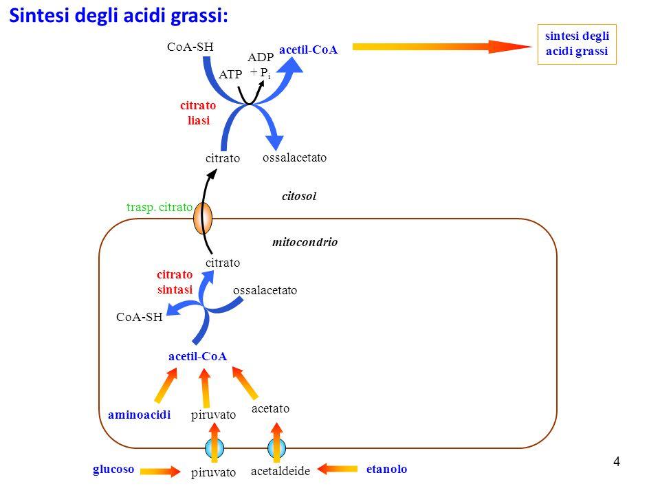 sintesi degli acidi grassi