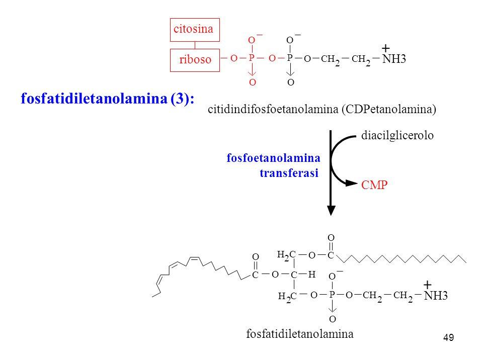 fosfatidiletanolamina (3):