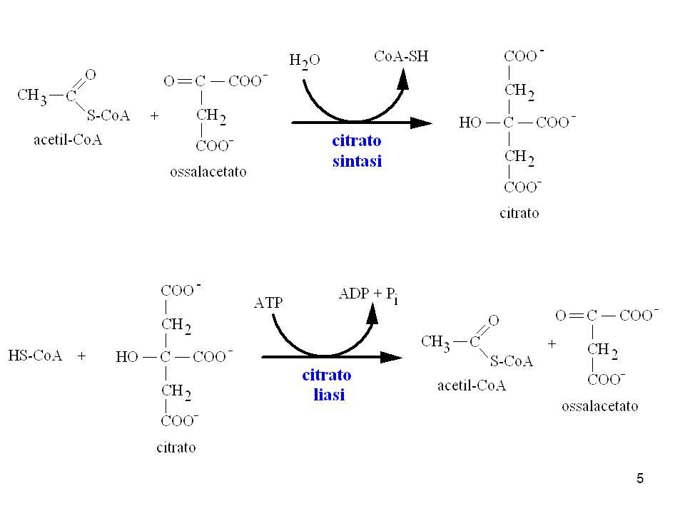 La citrato sintesi agisce nella matrice mitocondriale.