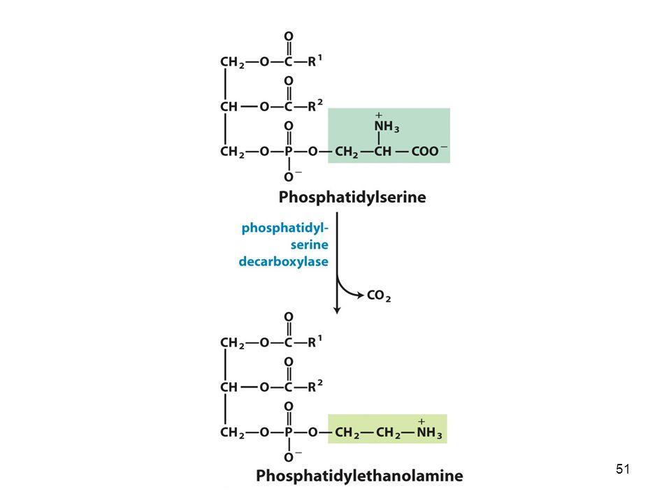 Nei eucarioti la fosfatidiletanolammina può essere sintetizzata dalla fosfatidilserina in una reazione catalizzata dalla fosfatidilserina decarbossilasi.