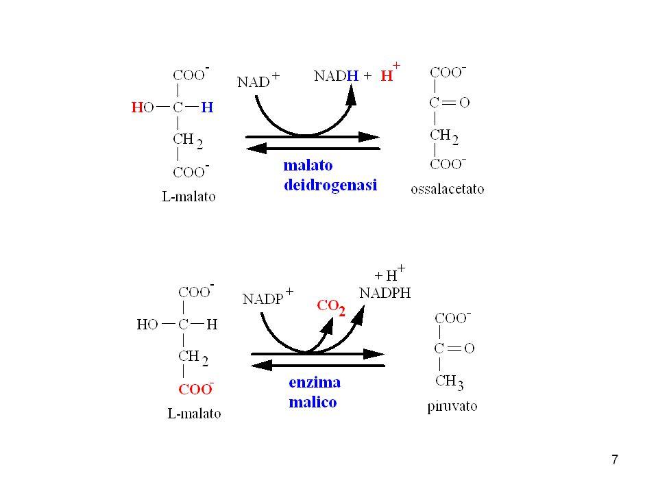 La malato deidrogenasi agisce nella matrice mitocondriale.