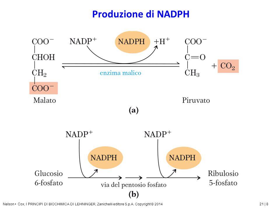 Produzione di NADPH