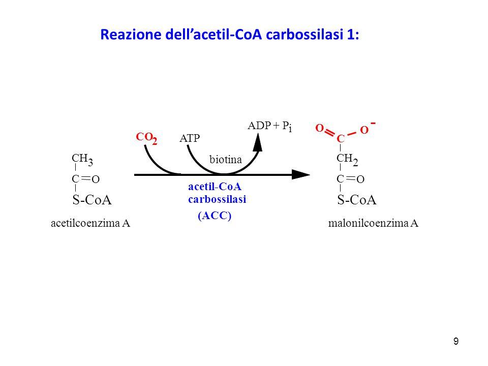 Reazione dell'acetil-CoA carbossilasi 1: