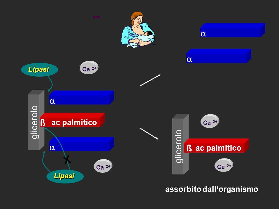 X    glicerolo ß glicerolo ß ac palmitico ac palmitico