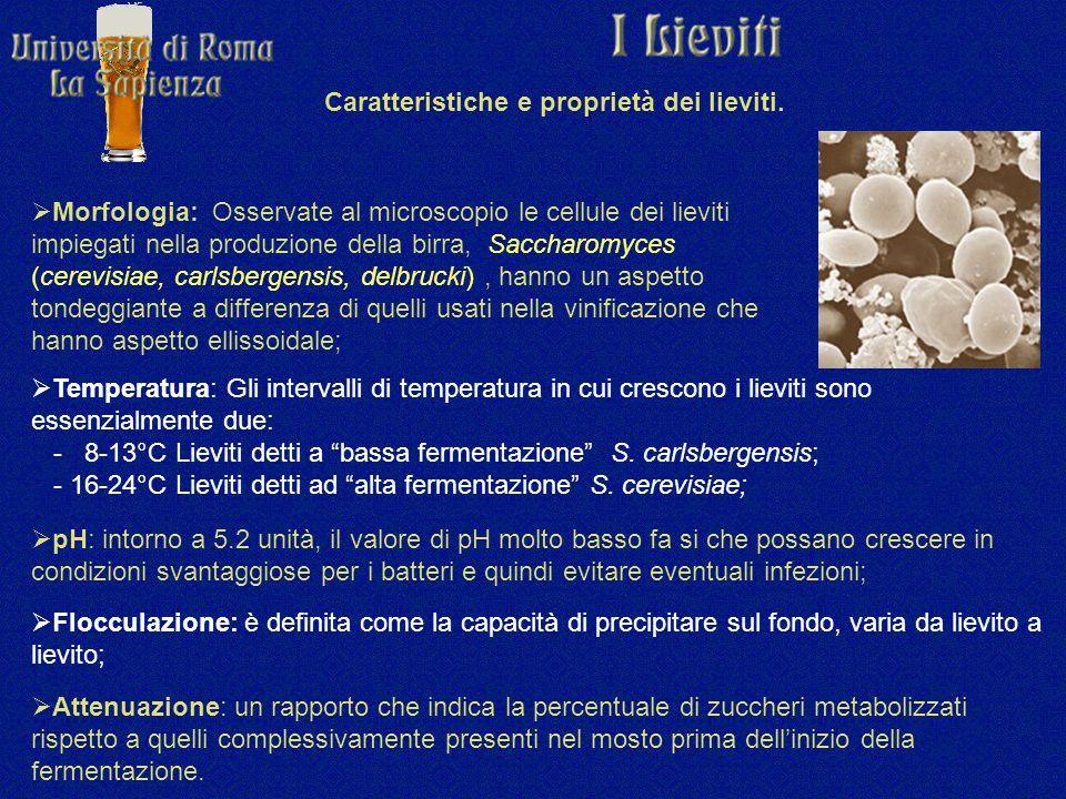 Caratteristiche e proprietà dei lieviti.